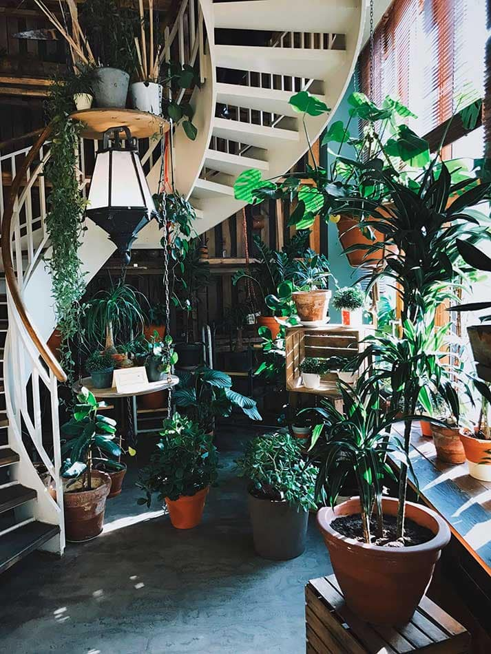 indoor greenery with ladder