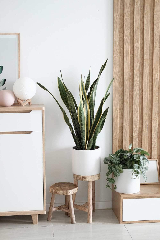 boho living room plant and decor idea
