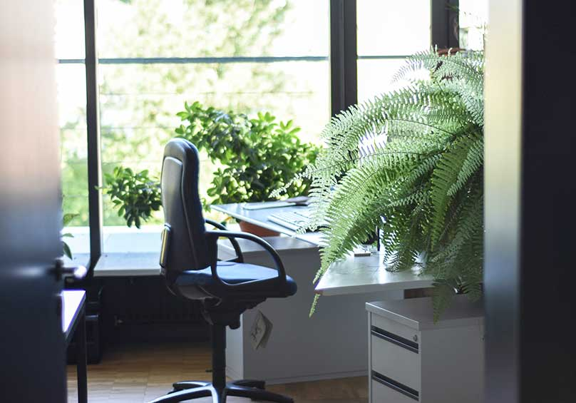 home office desk with bi plants.