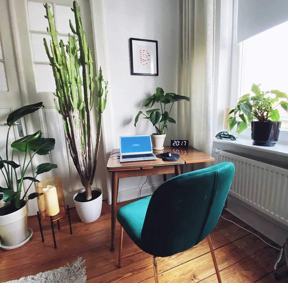Desk and greenery on the floor.